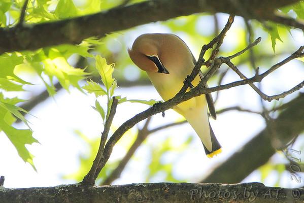 "2011 ""May"" Yardbirds"