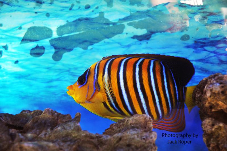 Australia fish .jpg