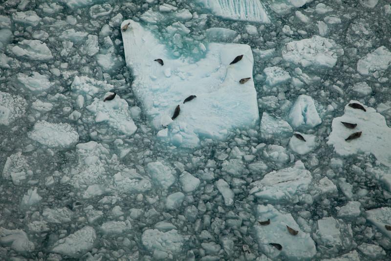 Alaska Icy Bay-3915.jpg