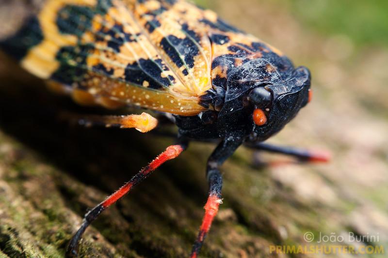 Details of a speckled plant hopper