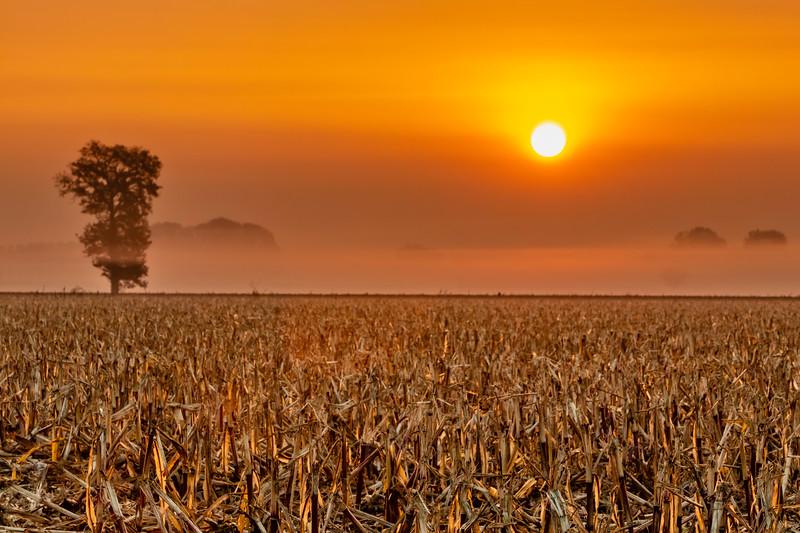 Piedmont cornfield at sunrise