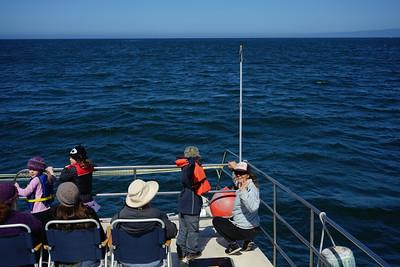 Wild Child Monterey Bay Boat Trip