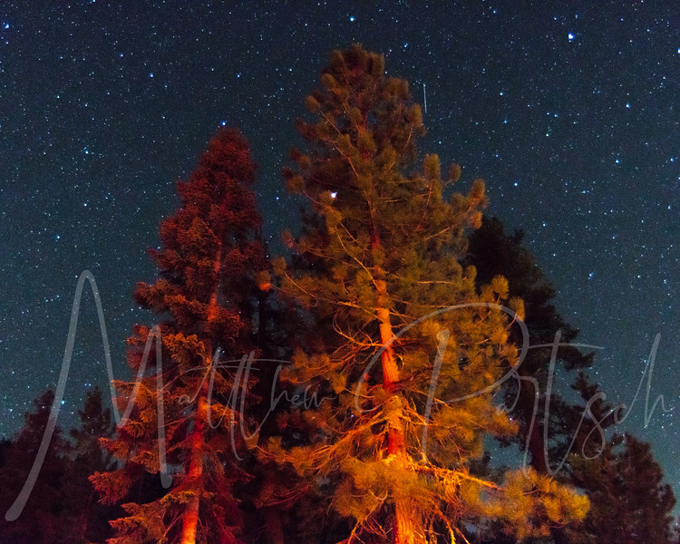 One of my star pictures from Sequoia National Forest