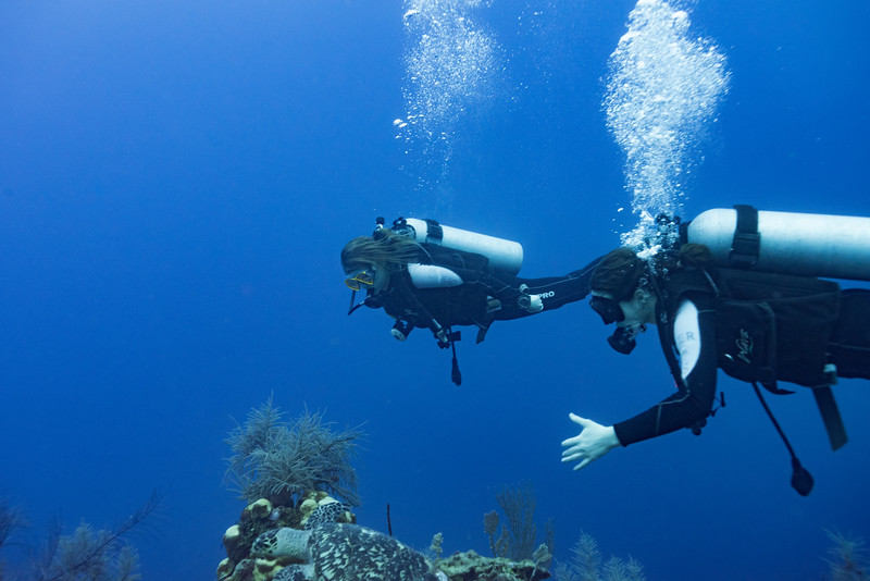 Scuba divers underwater with a sea turtle, Three Amigos, Turneffe Atoll, Belize Barrier Reef, Belize