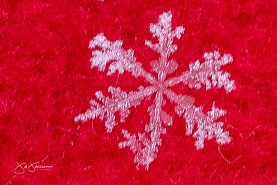 snowflakes-2743.jpg