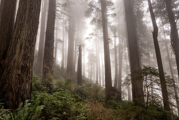 Redwoods National & State Parks 2018