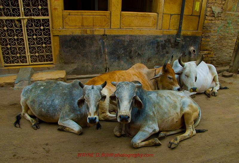INDIA2010-0208A-365A.jpg