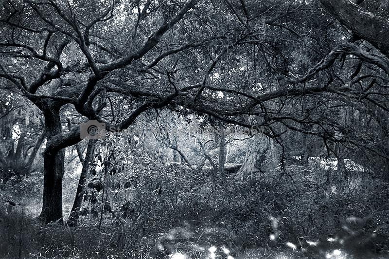 011 tree.jpg