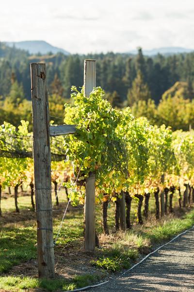 20160927_BC Wine Institute - Vancouver Island Region-1005.jpg