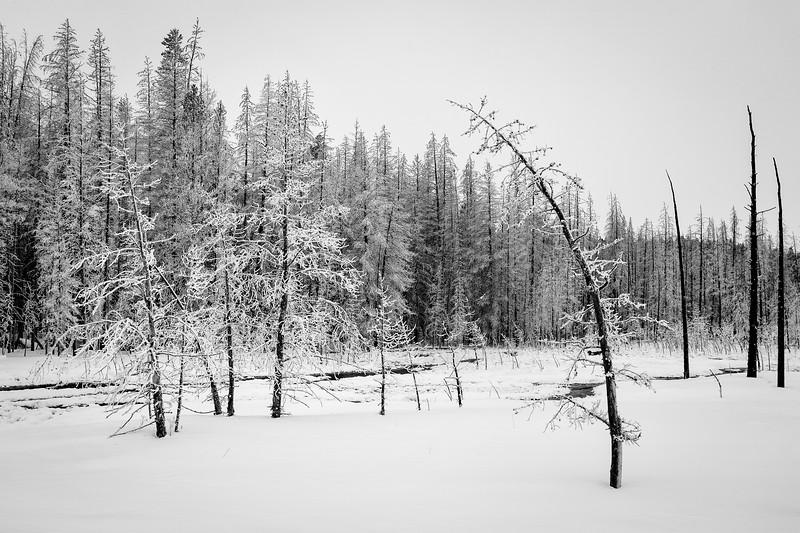 Tangle Creek Trees