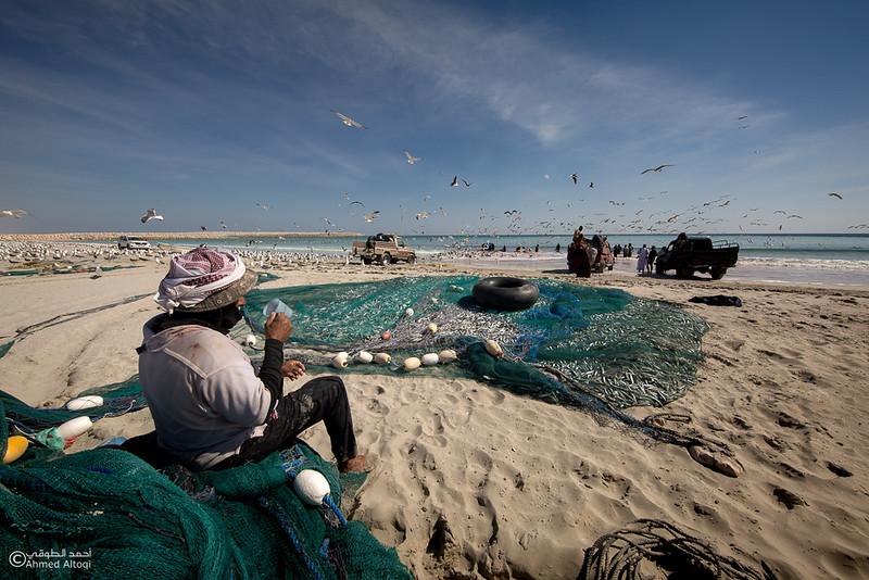 Sardine Season- Dhofar.jpg