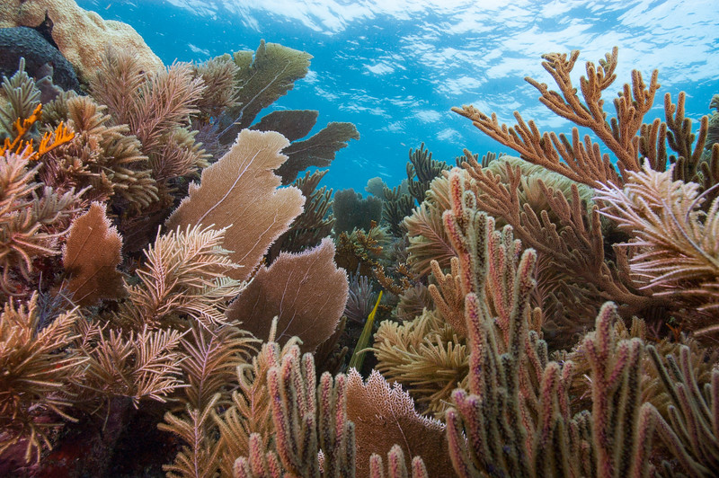 Soft coral gardens in Biscayne National Park.