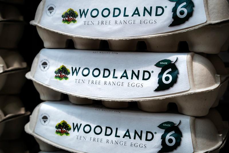 Eggs 88.jpg