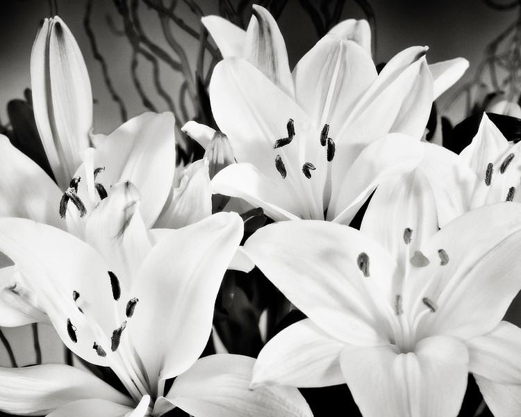 yellow-lilies.jpg