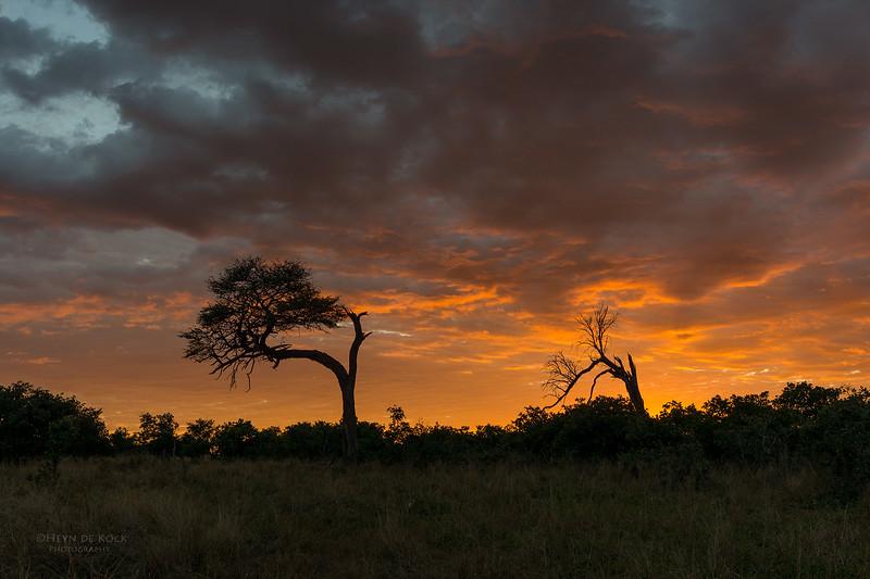 Savuti, Chobe NP, Botswana, May 2017-1.jpg