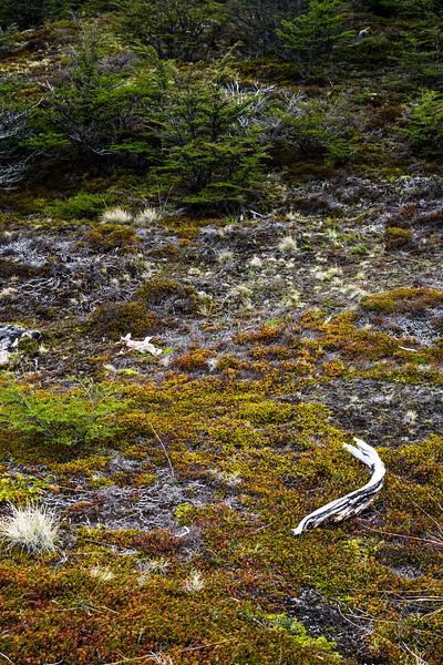 Patagonia-93.jpg