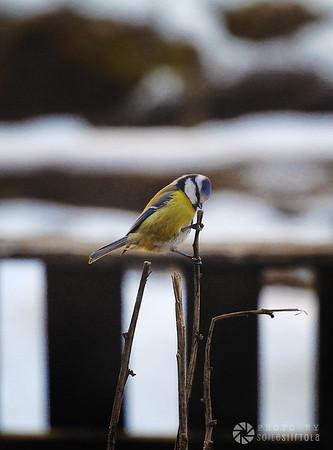 Vinter 2019 - Fåglar