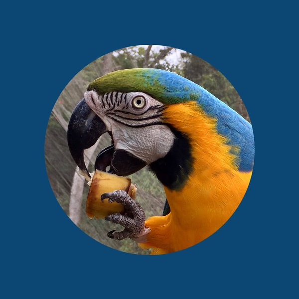 Macaw (circle).jpg