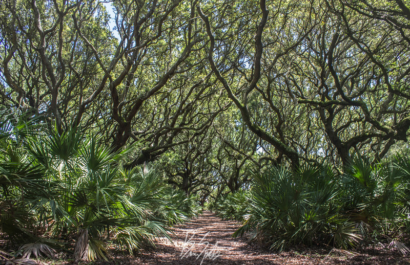 trees_.jpg