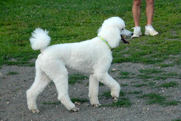 2010-06-29 Denville Dog Park