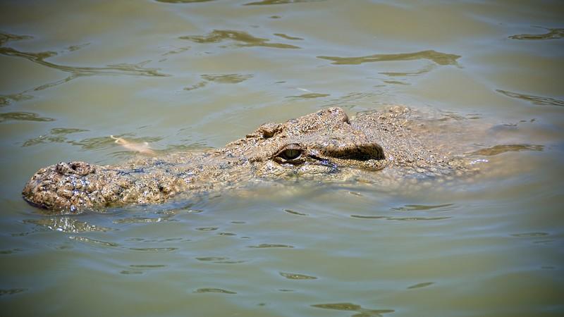 Koorana Croc Farm
