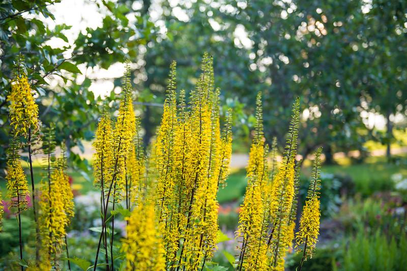 Leduc Stone Barn Garden Plants