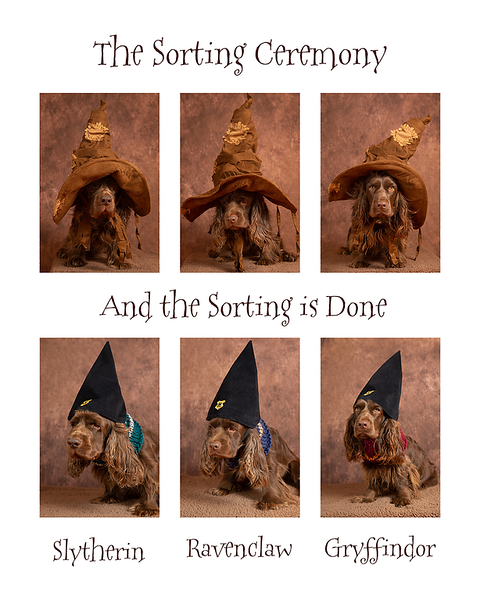 Sorting Ceremony.png