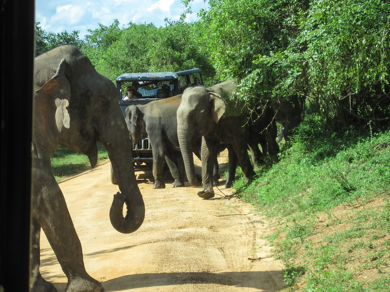 Sri_Lanka17-9844.jpg