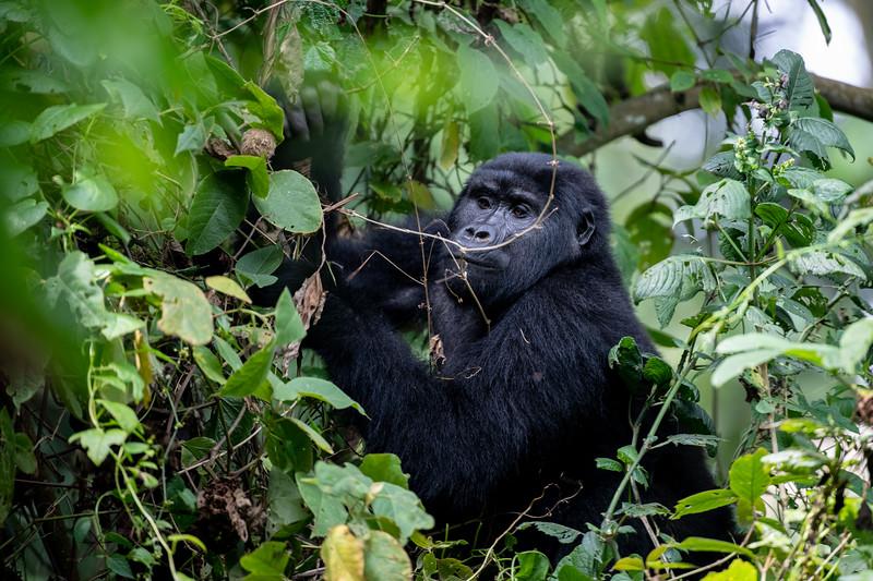 Uganda_T_Gor-2153.jpg