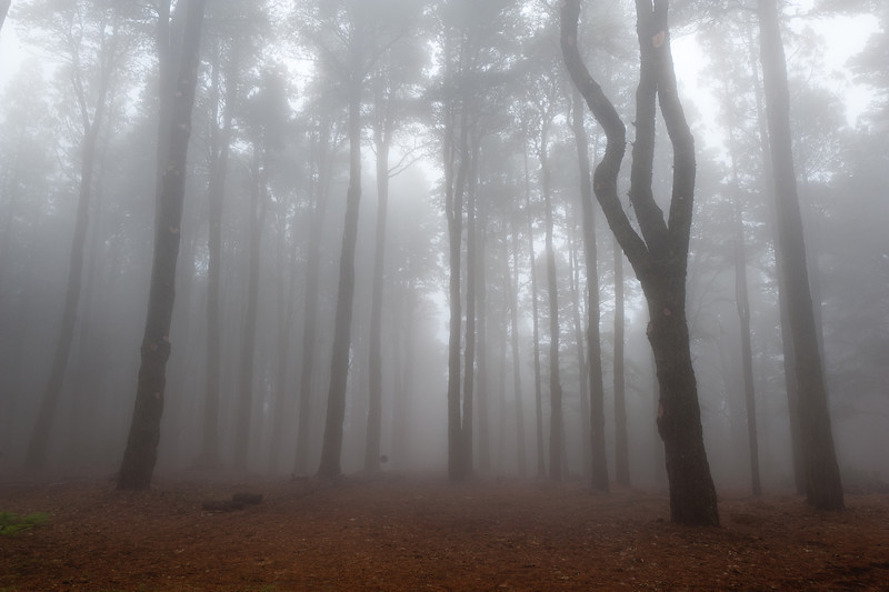 Thick fog at Caldera de Taburiente National Park in La Palma, Spain