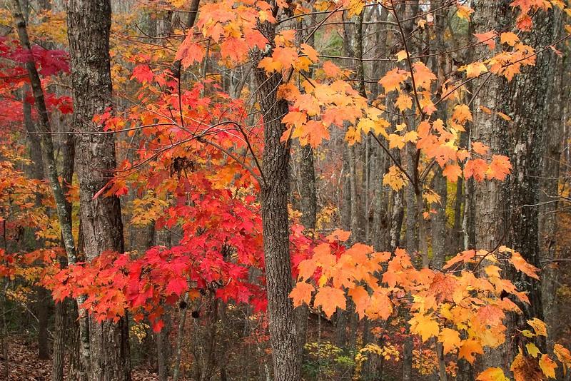 fall colors_6306.jpg
