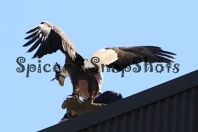 GSU Football game and Eagle