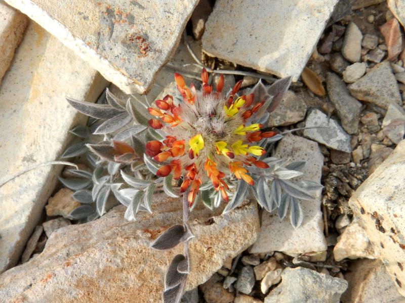 Flower tiny2.jpg