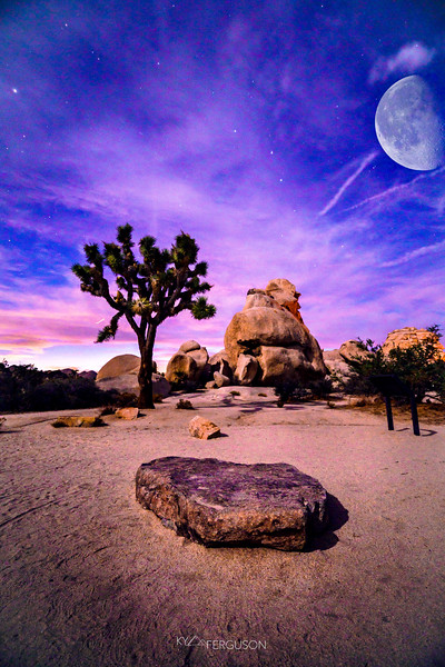 joshua tree night.jpg