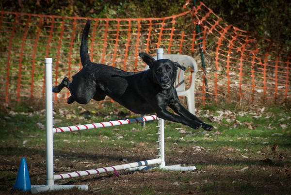 2013-11-03 NADAC Dog Agility Trial at St. Huberts