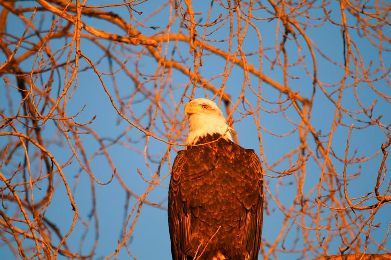 2-18-17 Eagle Final-15.jpg