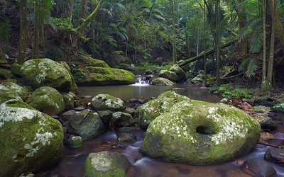 Tropical and sub-tropical rainforests