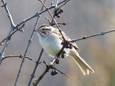 20160512 Cobourg Birding