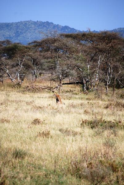 Serengeti (129).JPG