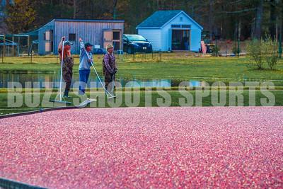 2015 Cranberry Harvest