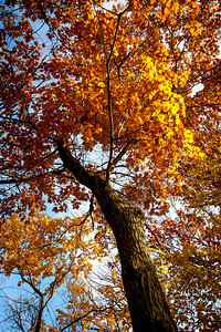 Arboretum Fall 2013 DSLR