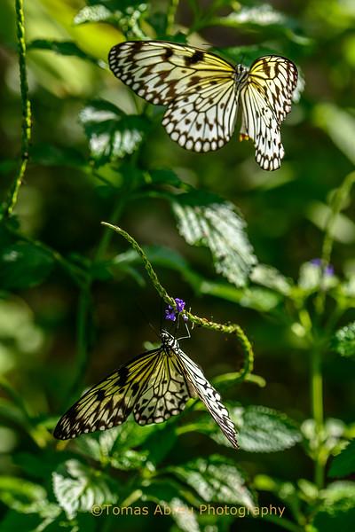 Fairchild Tropical Gardens - Butterflies and Orchids