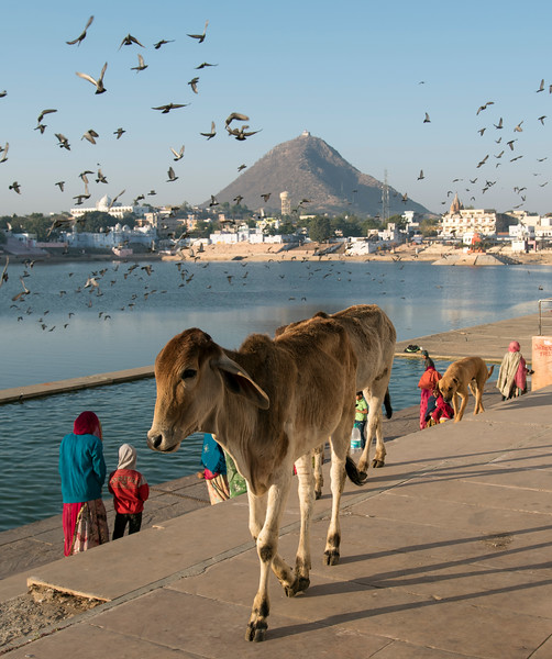 Pushkar Lake, India