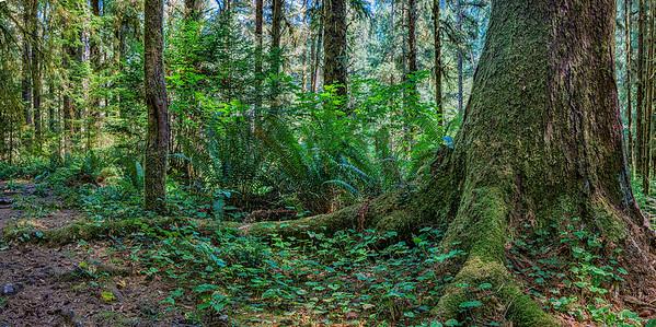 Skunk Cabbage Creek_Coastal Trail