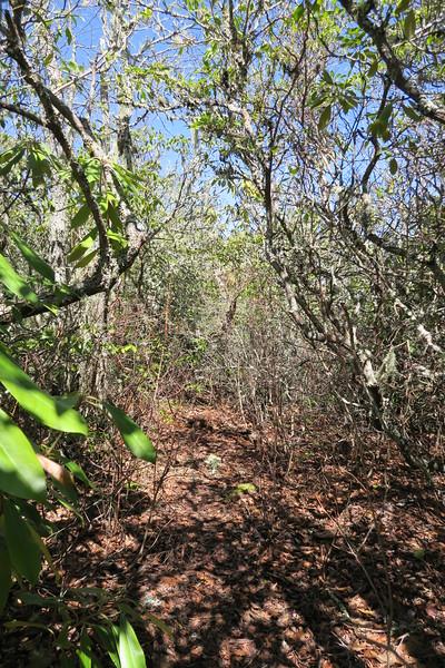 Shelton Pisgah Trail - 4,320'
