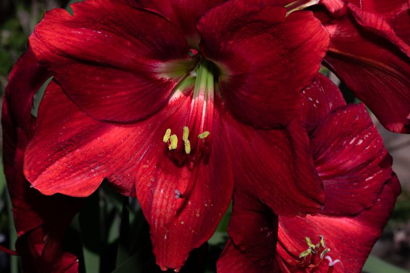 red_flowers2-9729.jpg
