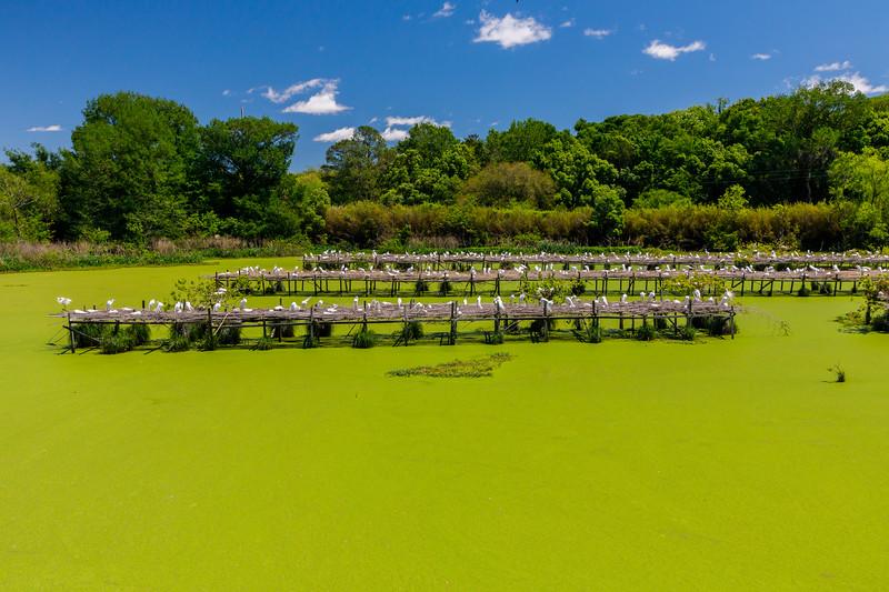 Avery Island Jungle Gardens