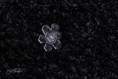 snowflakes-1548.jpg