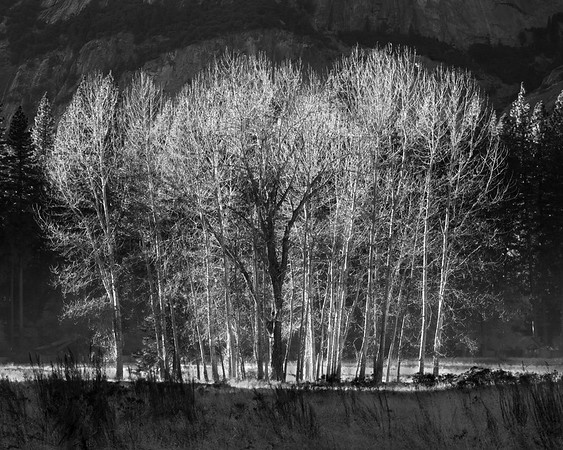 Black and White Landscape Pictures for Sale
