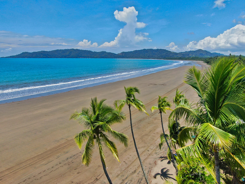Palm trees with the beach and ocean from a drone in Costa Rica